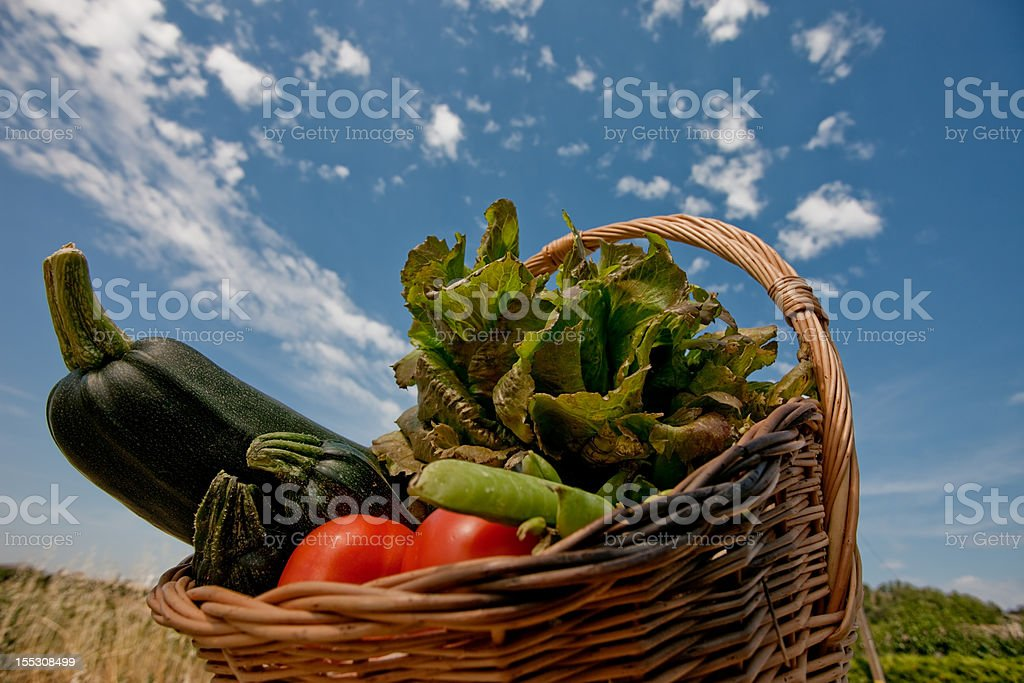 Organic vegetables against sky royalty-free stock photo