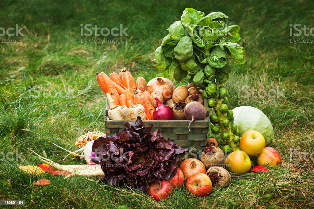 Organic vegetables and fruit basket stock photo