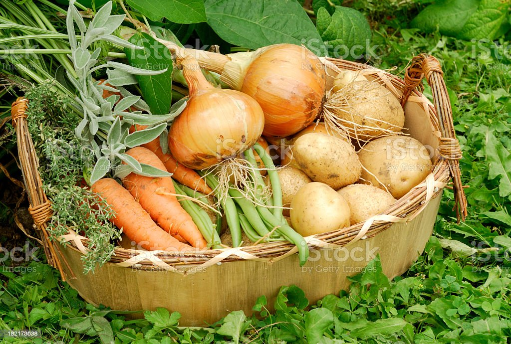 Organic Vegetables from the Garden stock photo
