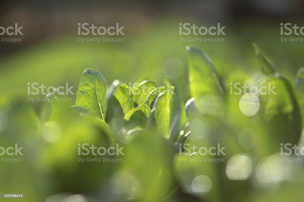 organic veggies stock photo