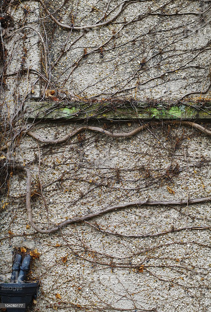 Organic wall, alive royalty-free stock photo