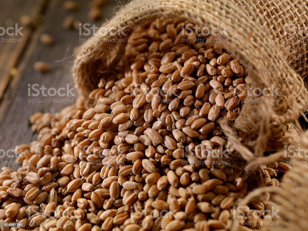 Organic Wheat Kernels stock photo