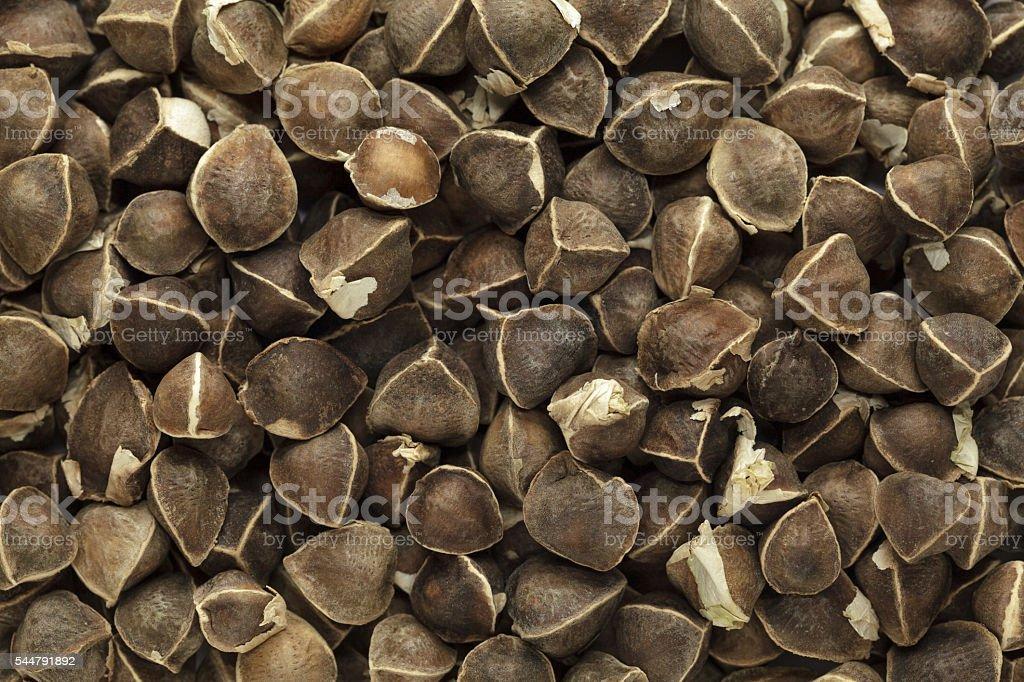 Organic Wingless Moringa (Moringa oleifera) seeds. stock photo