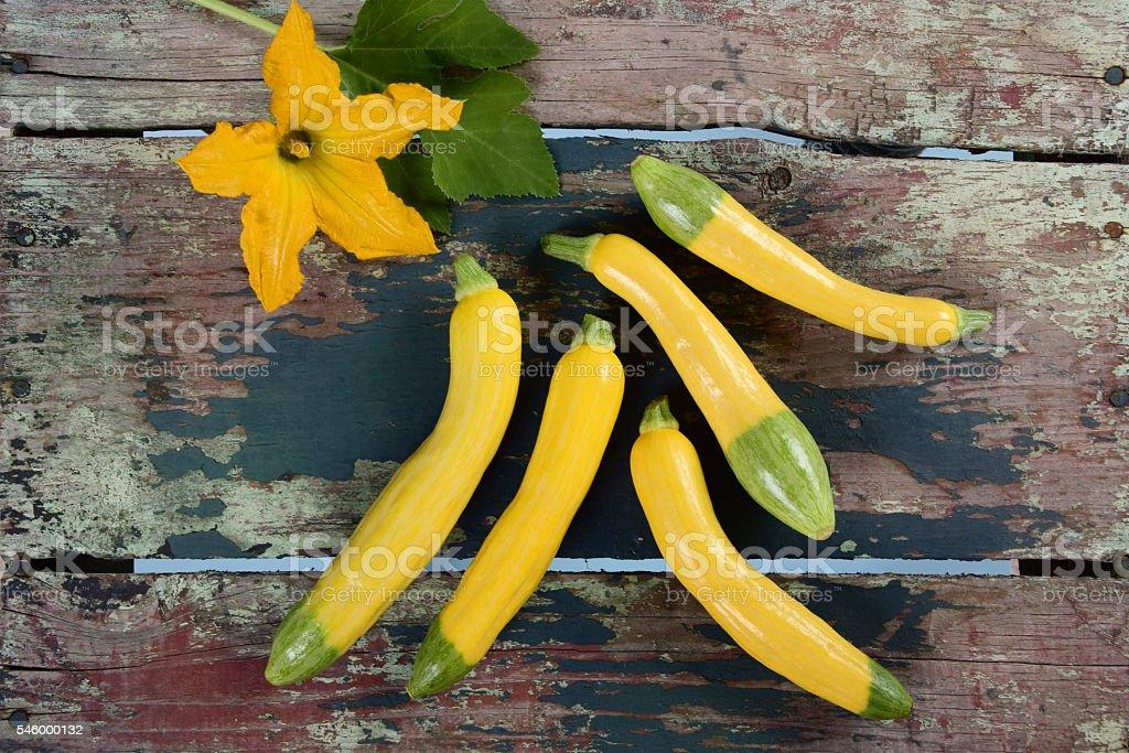 Organic Zephyr Squash stock photo
