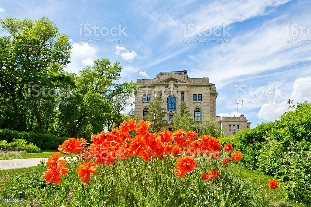 Oriental poppies and Saskatchewan Legislative Building in Regina stock photo