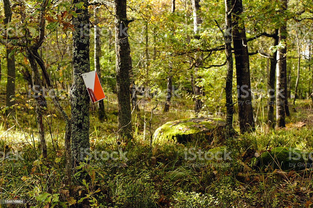 Orienteering control point in a sunny forest stock photo