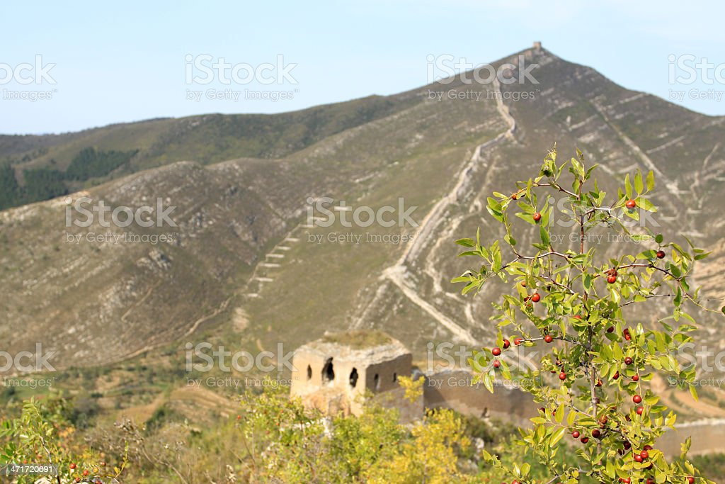 original ecology of the great wall and wild jujube stock photo