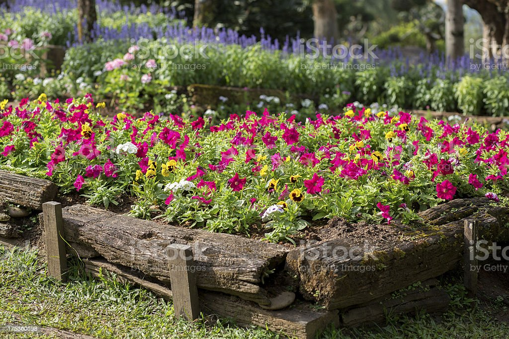 Original Flower Bed in a wooden log royalty-free stock photo