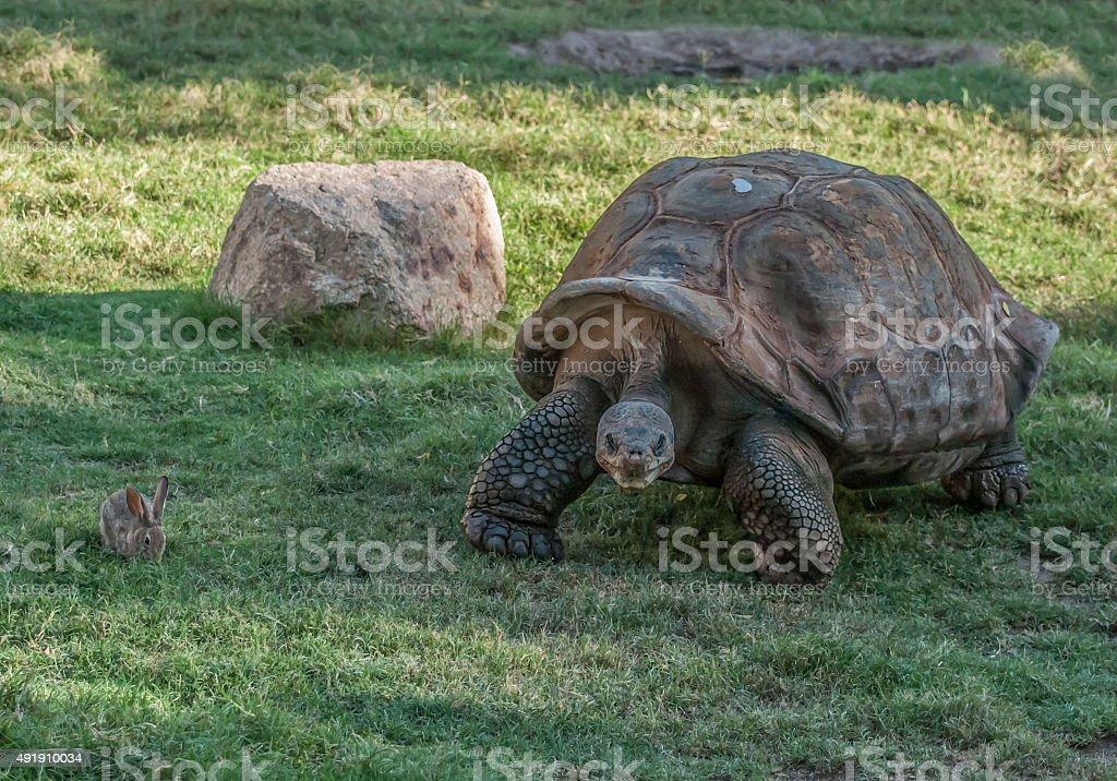 original tortoise and hare stock photo