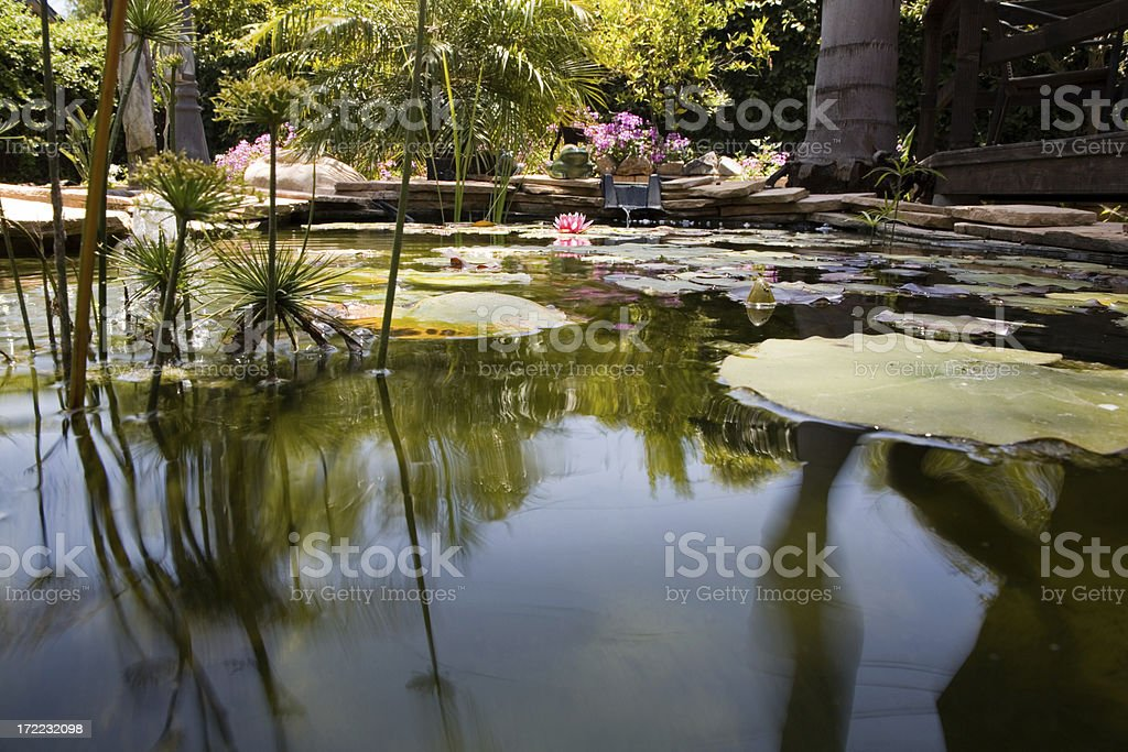 Ornamental garden pond with lily pads and flowers royalty-free stock photo