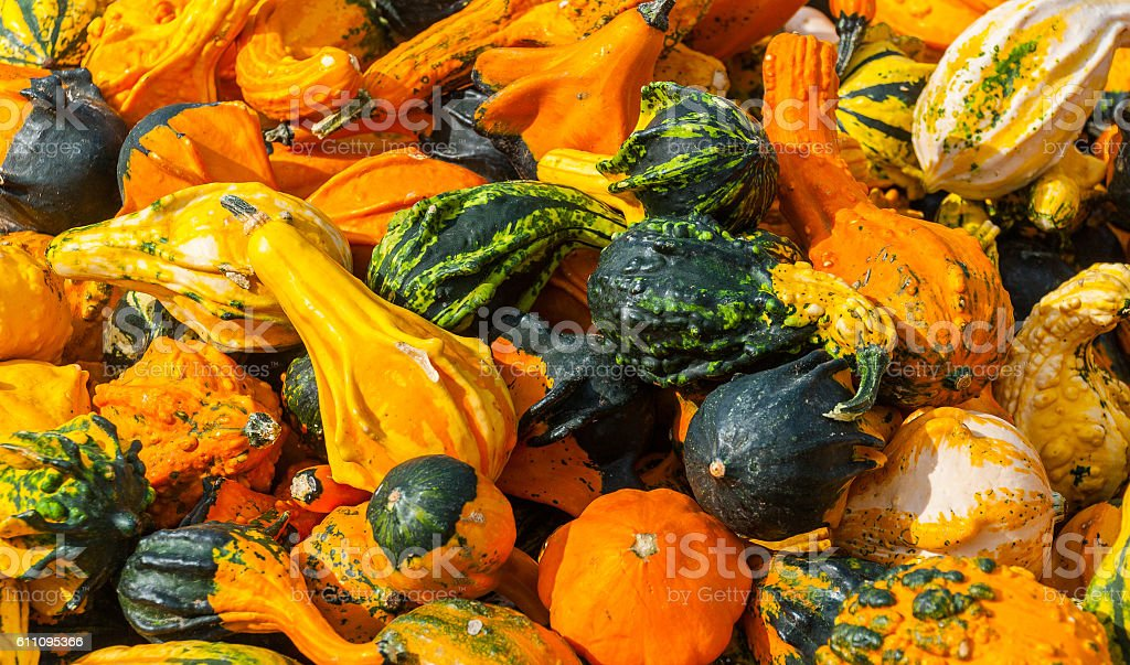 ornamental gourds background stock photo