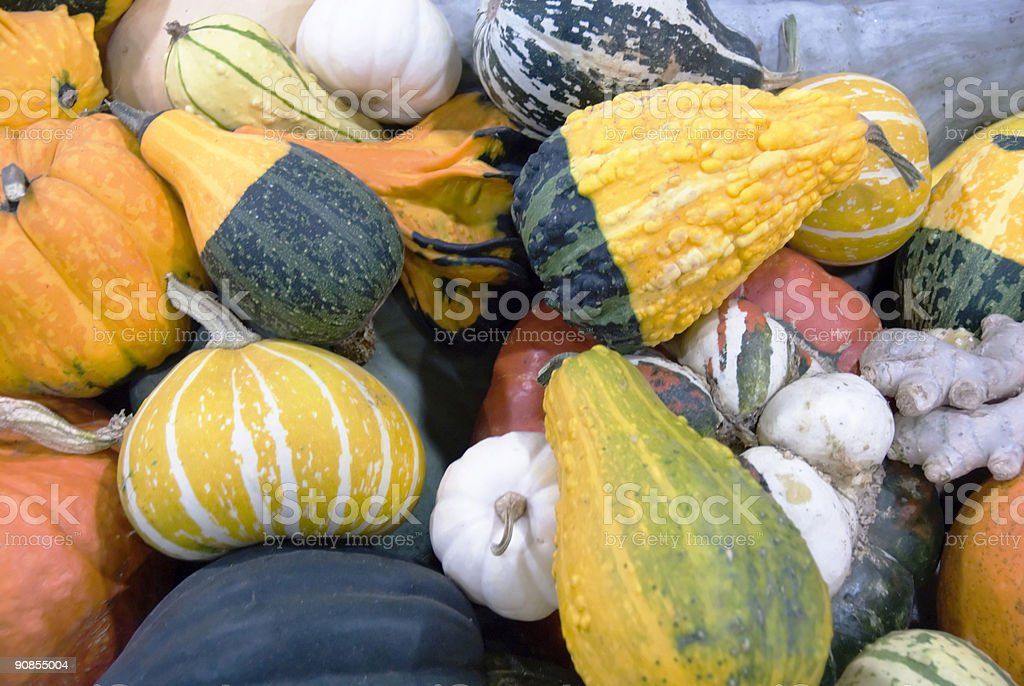 Ornamental Gourds royalty-free stock photo