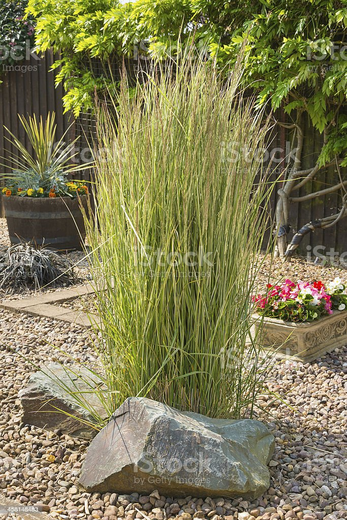 Ornamental grass in a gravel bed and rockery stock photo