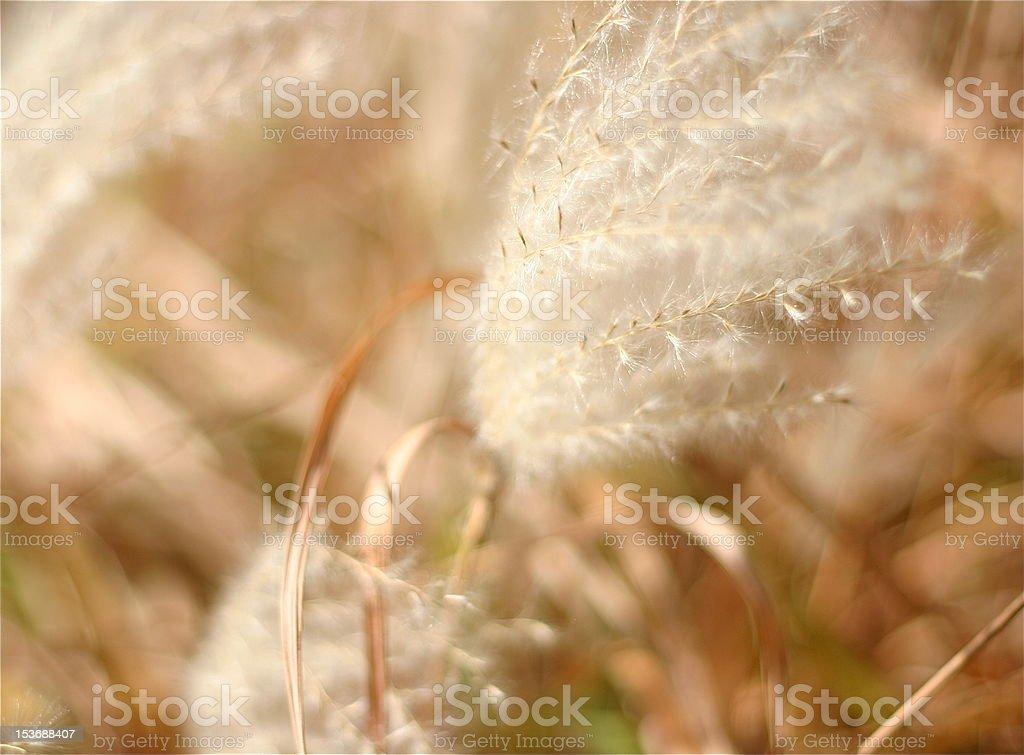 Planta Ornamental. foto de stock libre de derechos