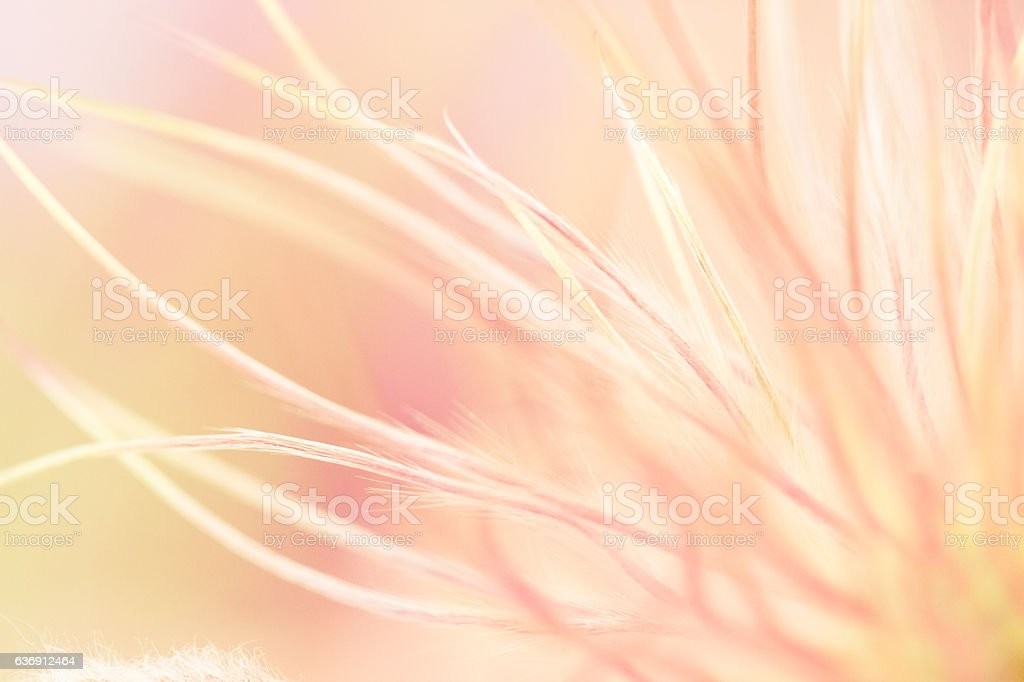 Ornamental Grass With Feathery Texture - Nature Background stock photo