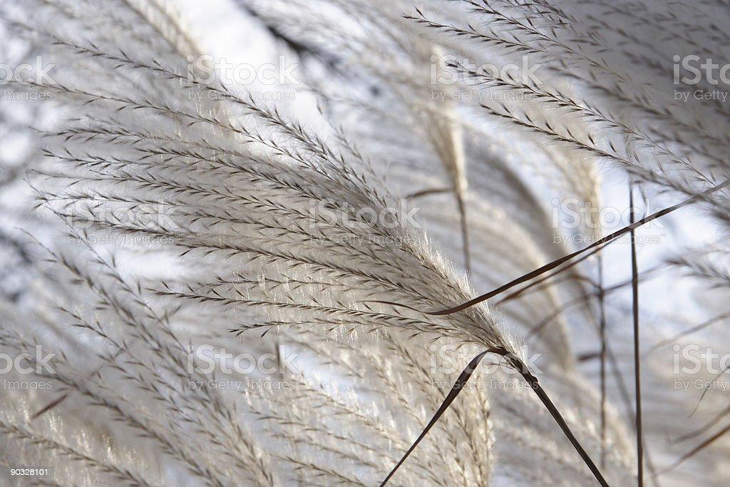 ornamental grasses 5 stock photo