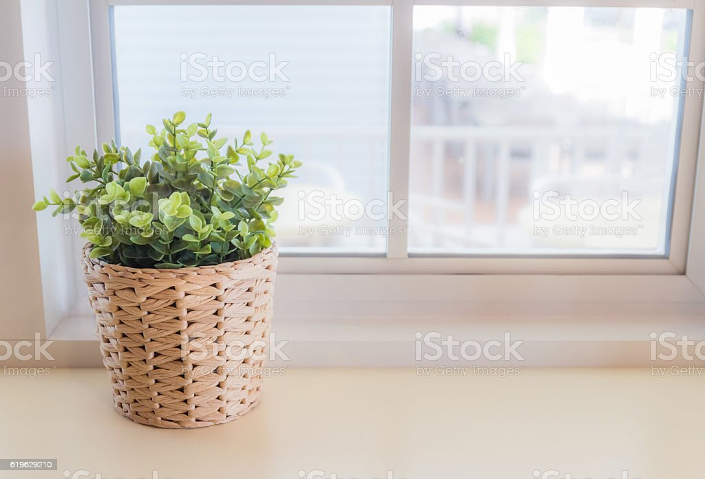 Ornamental plants by the window. The interior is beautiful. stock photo