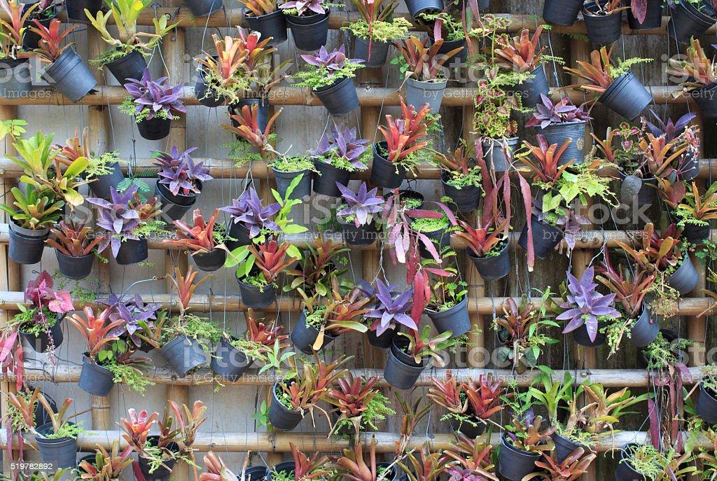 Декоративный растений висит на стене Стоковые фото Стоковая фотография