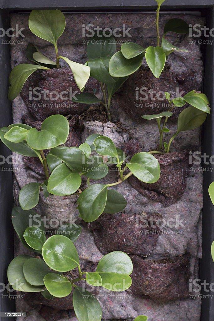 Декоративный растений, висит на стене, Горшок для цветов на одеяло Стоковые фото Стоковая фотография