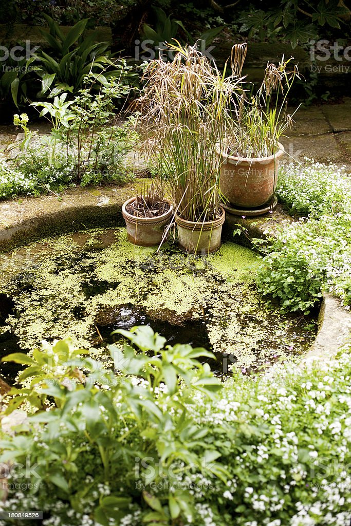 Ornamental pond stock photo