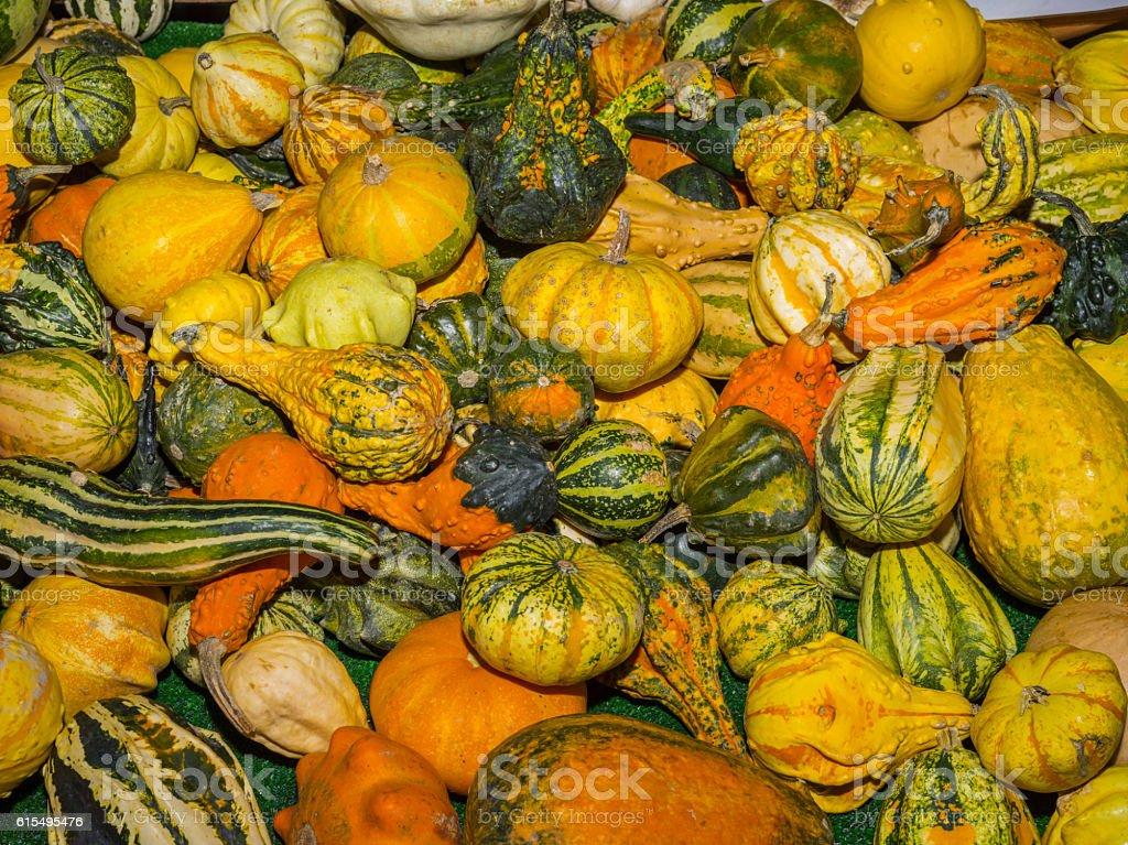 Ornamental pumpkins (International White Truffle Fair, Alba, Italy) stock photo