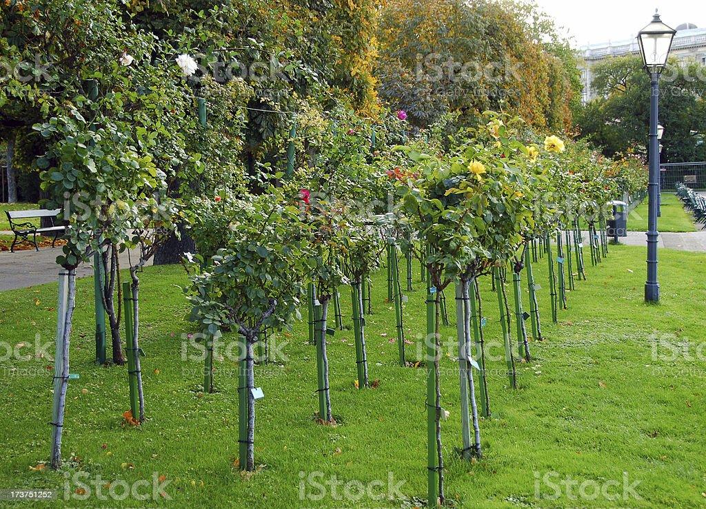 Ornamental Rose Garden royalty-free stock photo