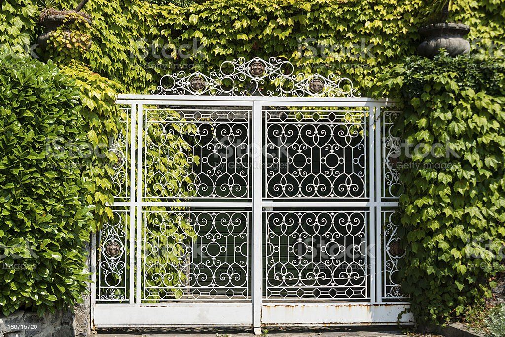 Ornate metal gate surrounded in green ivy -XXXL royalty-free stock photo