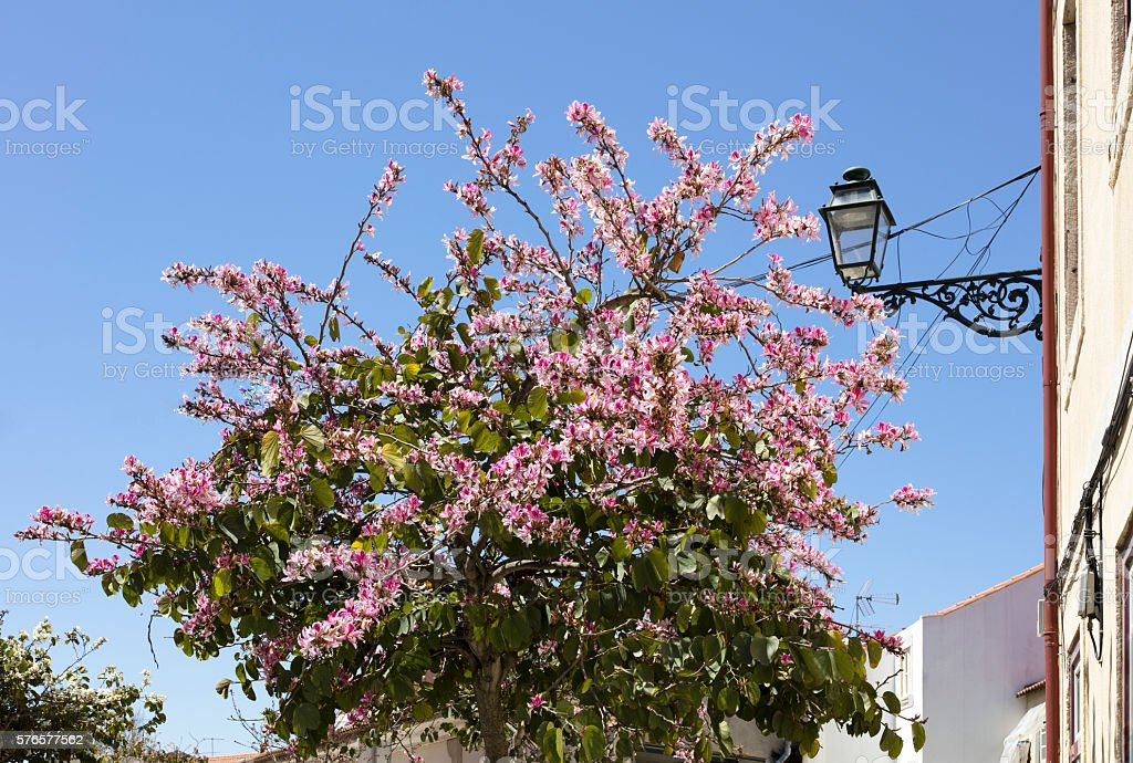 Ornate street lamp and blossom stock photo