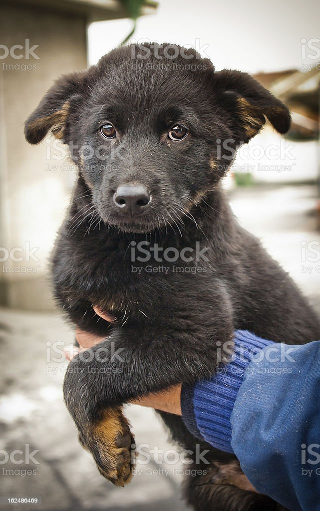 Orphan puppy hold by shelter royalty-free stock photo