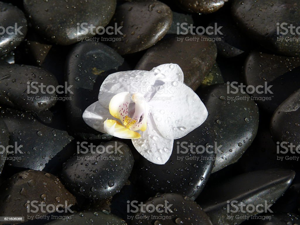 Orquídia stock photo