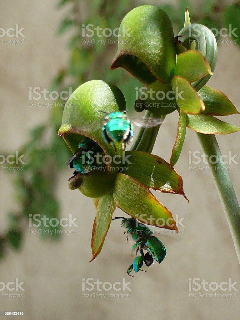 Orquidea with green hornets stock photo