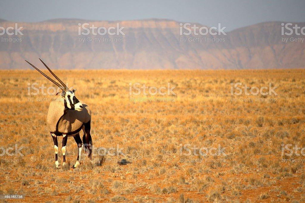 Oryx near Sossusvlei, Namibia stock photo