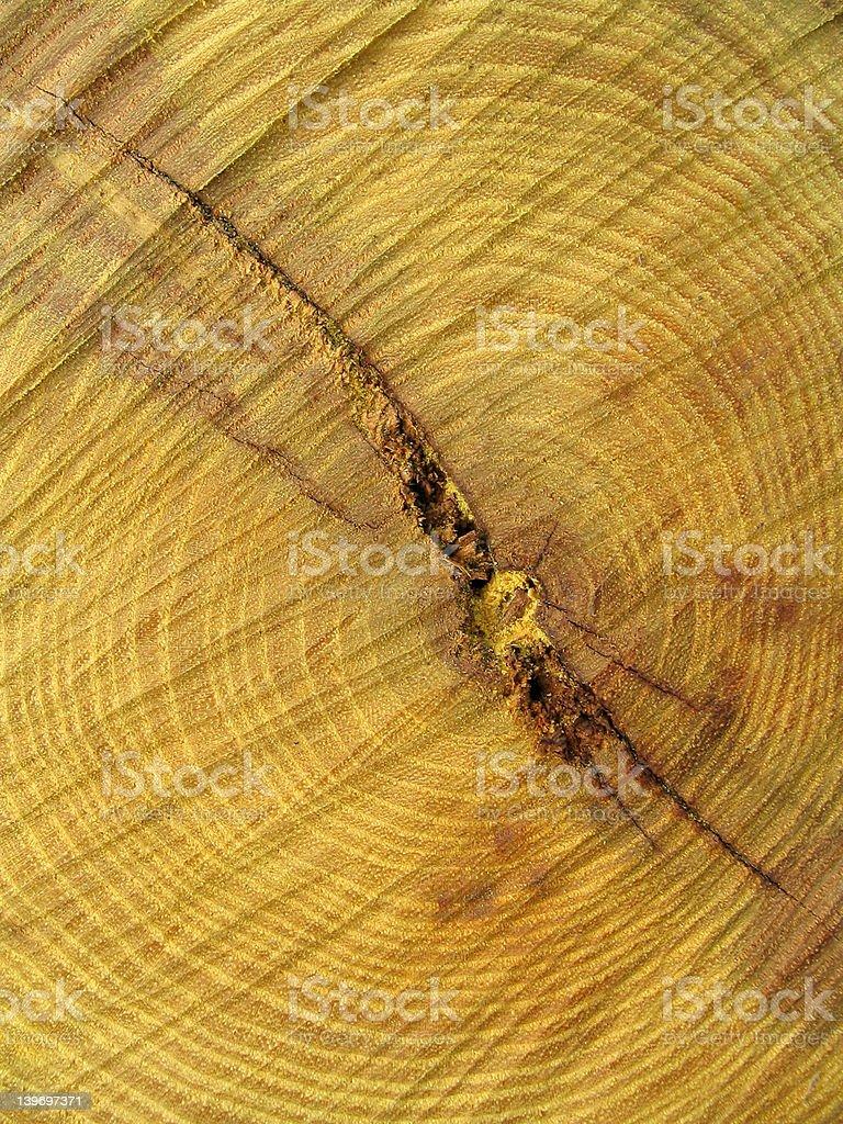 Osage Orange (Hedge Wood) stock photo