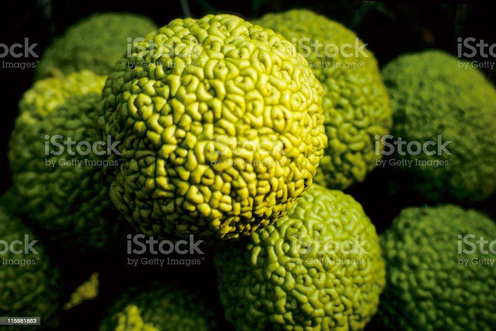 Osage Oranges stock photo
