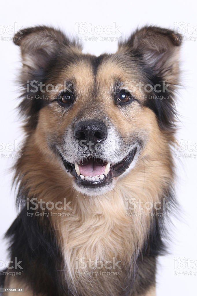 oscar smiles royalty-free stock photo