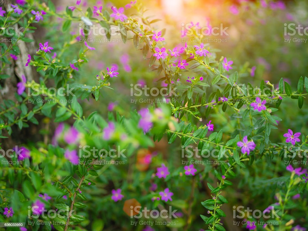 oseup of small purple flower and green leaves. stock photo