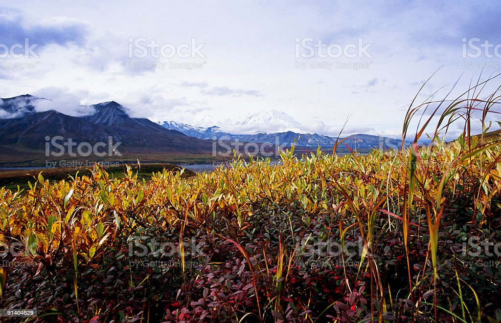 Osier on the hillside. royalty-free stock photo