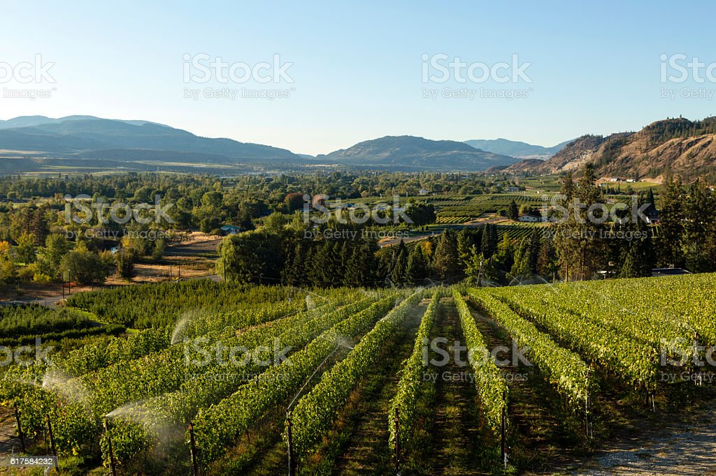 Osoyoos Vineyard Okanagan Valley stock photo