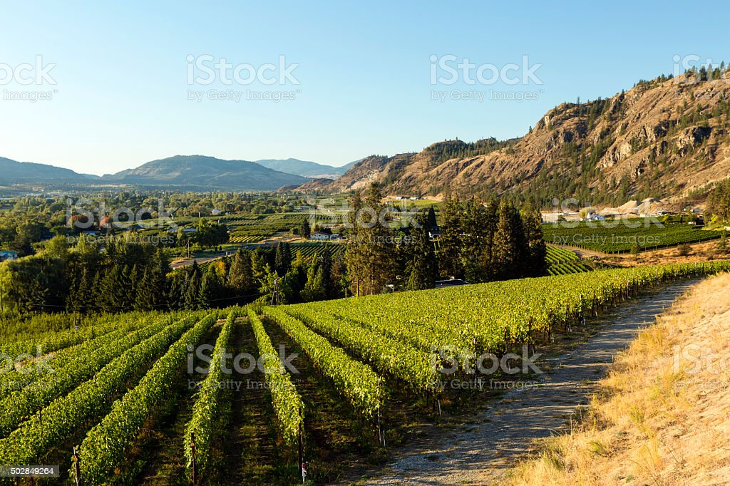 Osoyoos Vineyard Winery Okanagan Valley stock photo