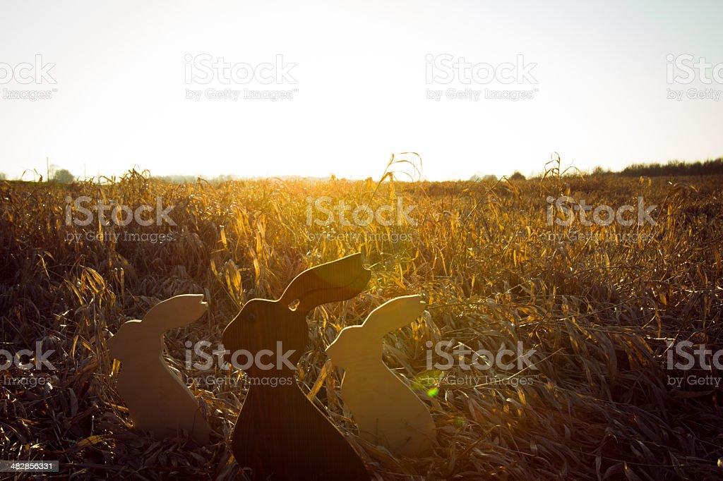 Osterhasen im Feld royalty-free stock photo