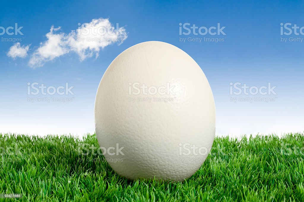 Ostrich Easter Egg royalty-free stock photo