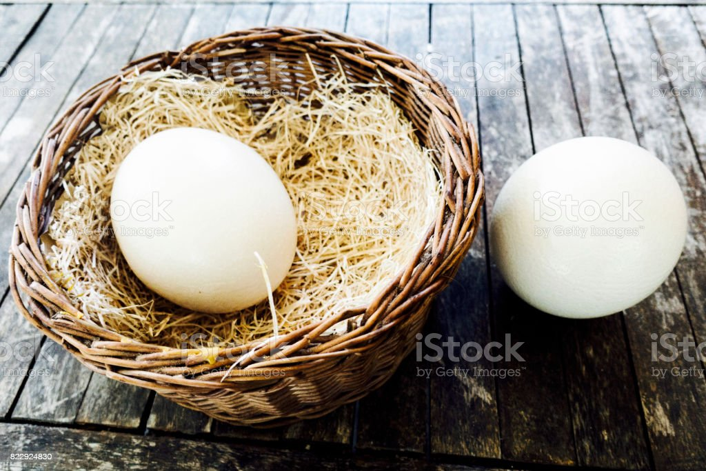 Ostrich Egg stock photo