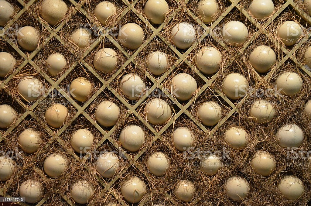 Ostrich eggs in boxes royalty-free stock photo