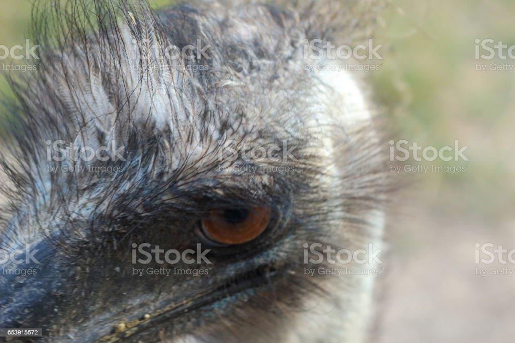 Ostrich. stock photo