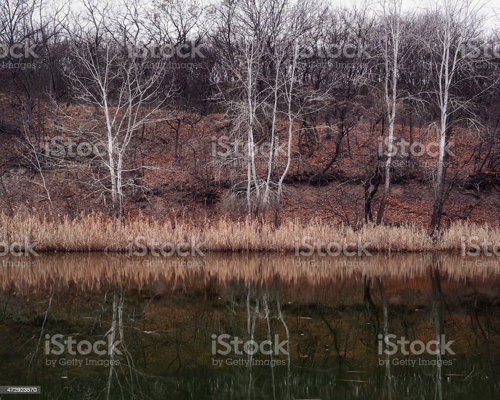 Otros los árboles foto de stock libre de derechos