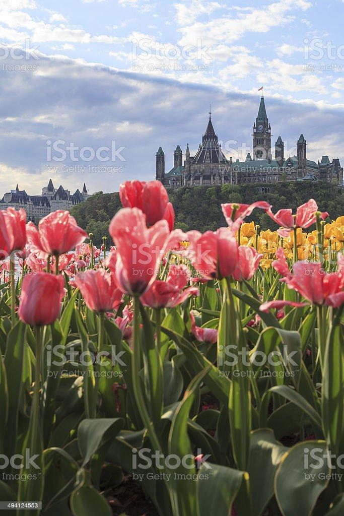 Ottawa Tulip Festival stock photo