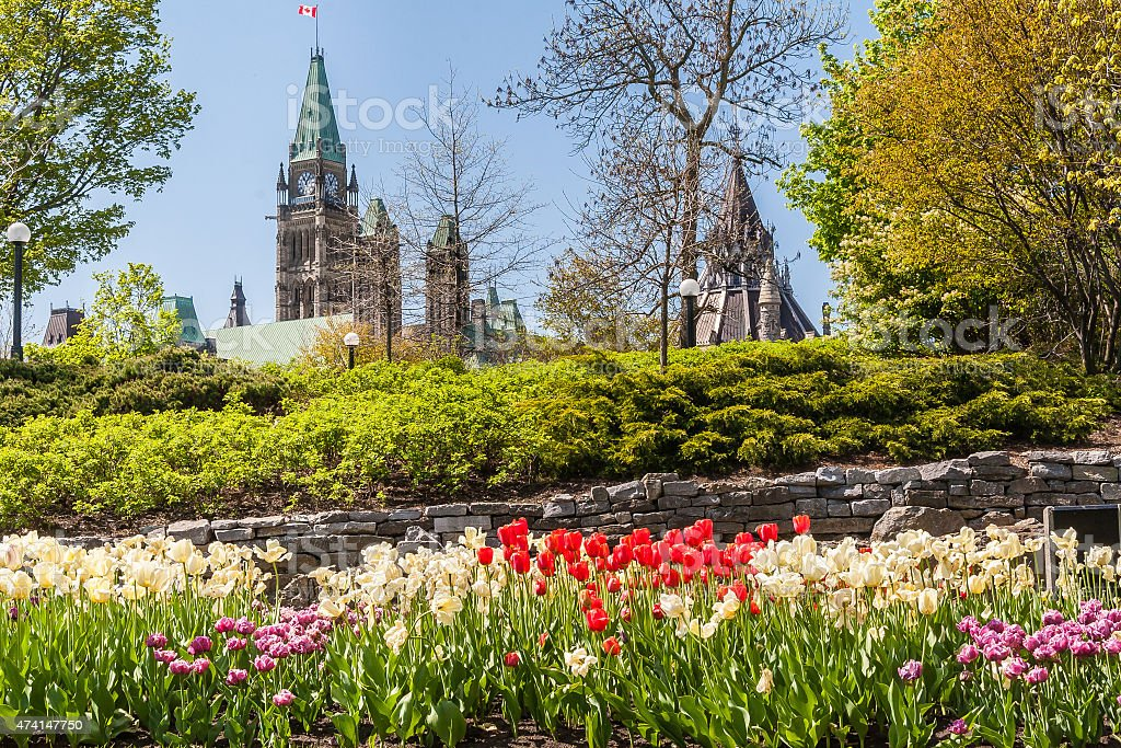 Ottawa's Tulip festival stock photo