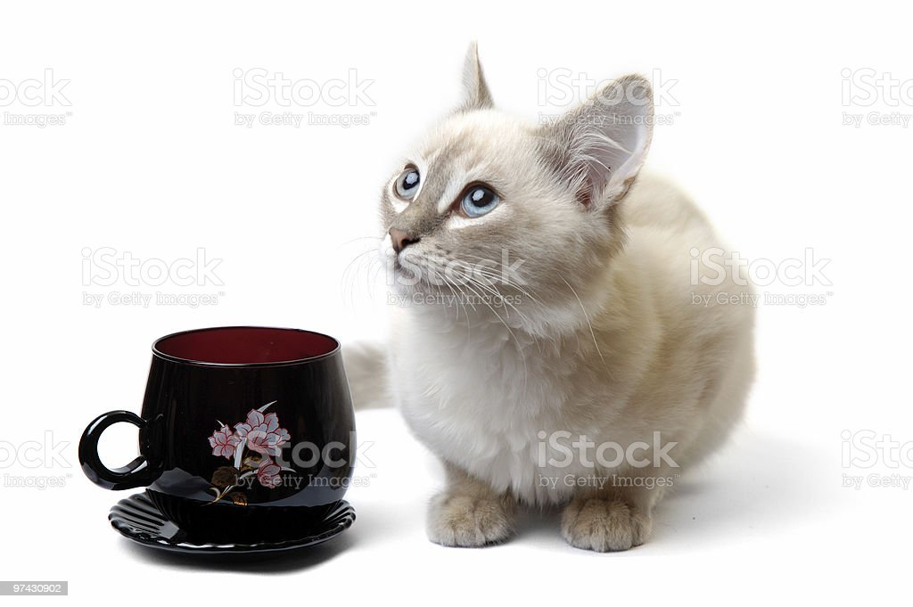 Our pets royalty-free stock photo