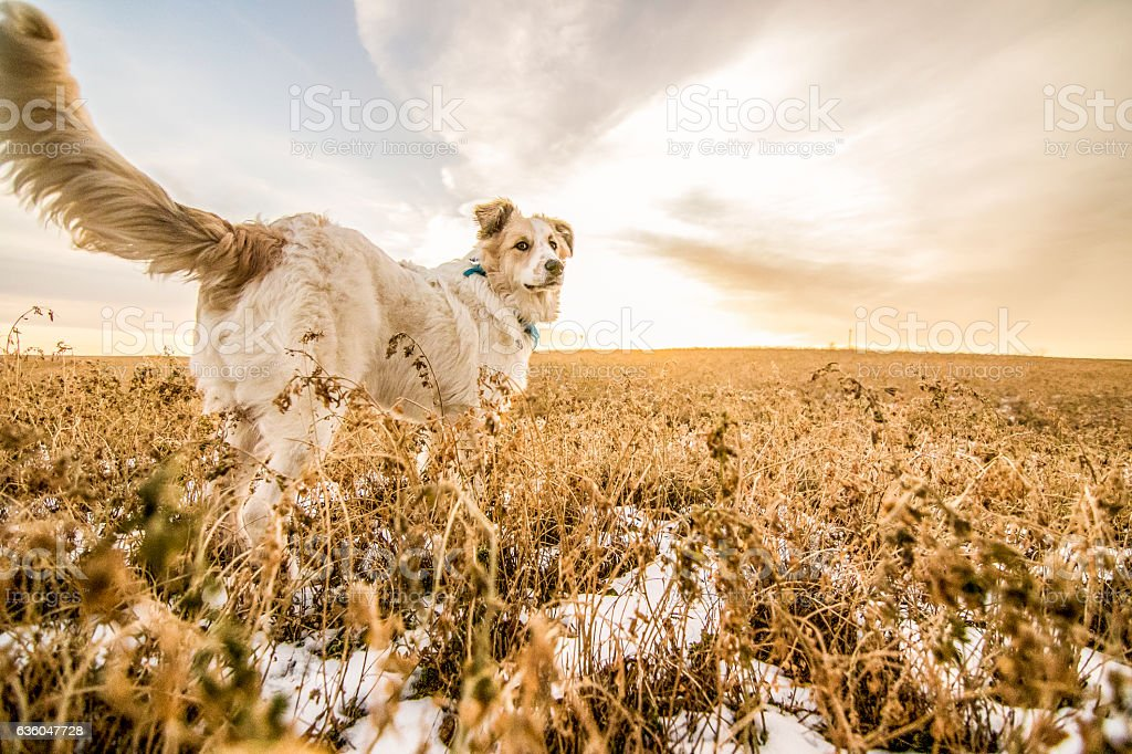 Out in the Fields of Kansas stock photo