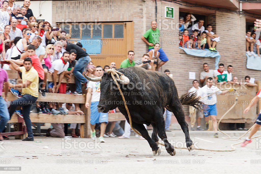 Out of the bull with rope Lodosa at parties Angustias stock photo